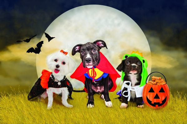 Spoto's Howl-o-Ween