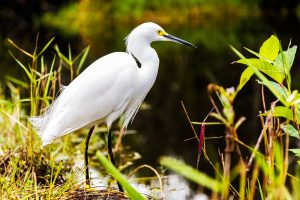 Free Tickets to Everglades Day Festival in Loxahatchee