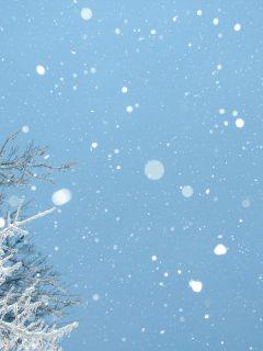 Holiday Snowfalls